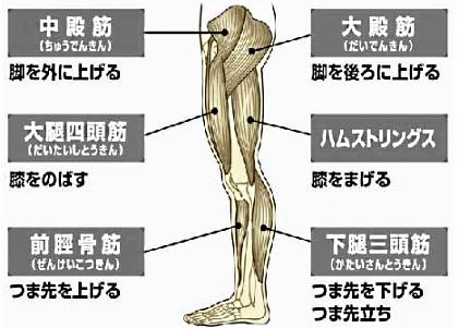 大臀筋-1.jpg
