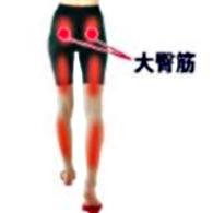 大臀筋-2.jpg
